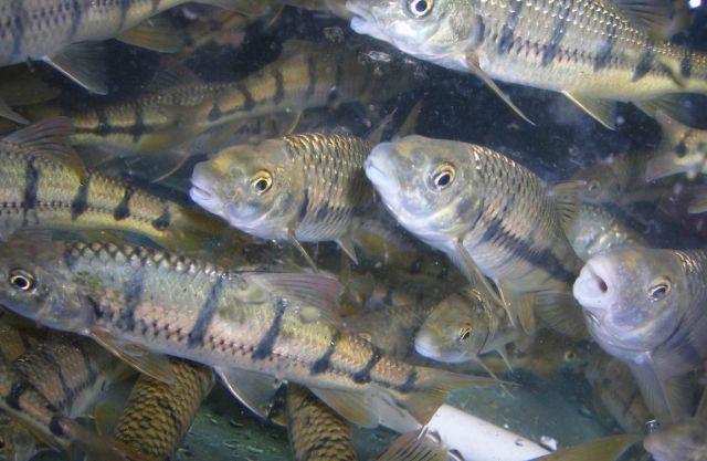 浅谈石斑的钓法石斑鱼又名(鱼会)鱼,我国沿海以浙江,福建和广东海域