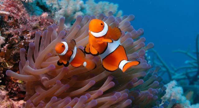 目中最萌呆的海洋动物前