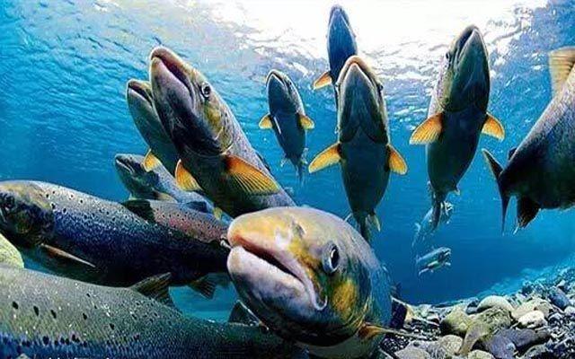 壁纸 动物 海底 海底世界 海洋馆 水族馆 鱼 鱼类 640_400